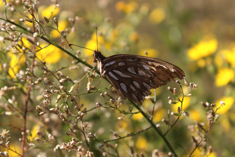 Butterfly on a plant.